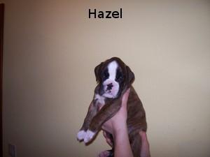 Hazel (Hündin)